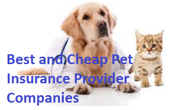 Best Pet Insurance Provider for Dogs