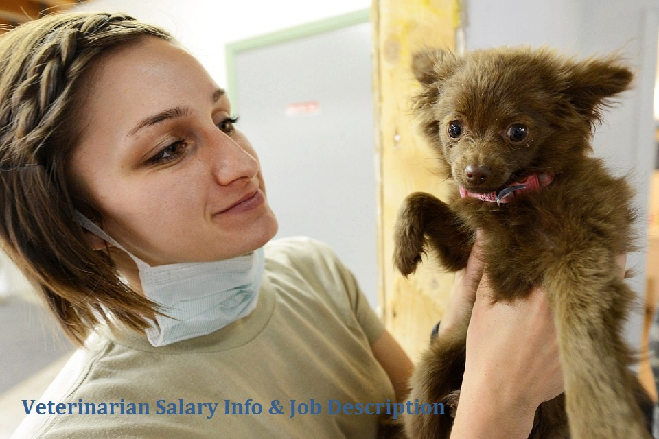 veterinarian pay